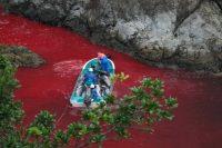 Il business dei delfini selvatici in Giappone