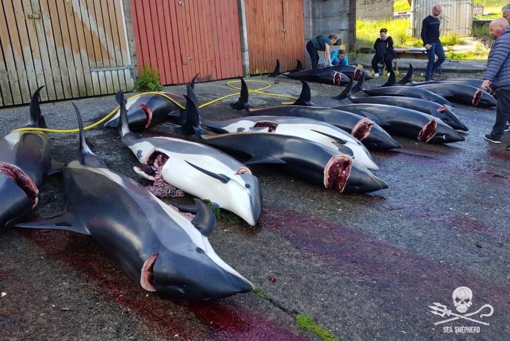 Resoconto della squadra numero 3 impegnata alle Isole Faroe