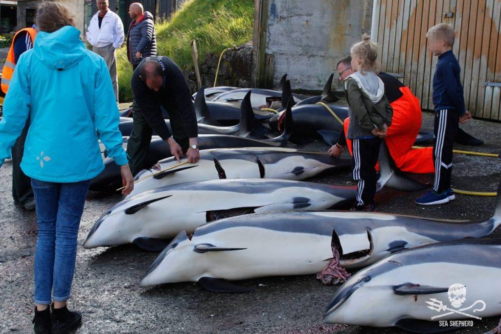 I volontari di Sea Shepherd simpegnati alle Isole Faroe