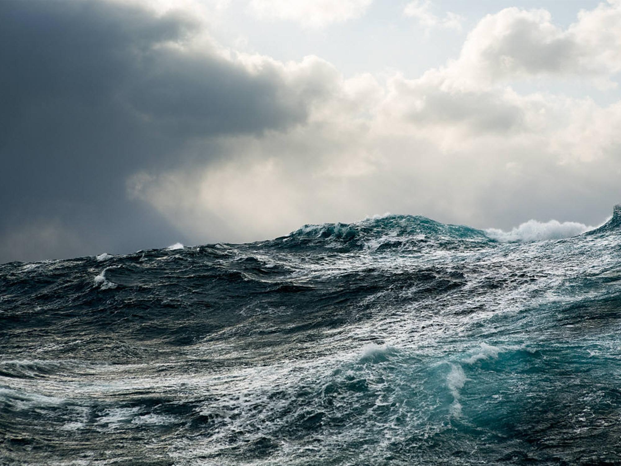 SEA SHEPHERD x JASMINE ALEXANDER