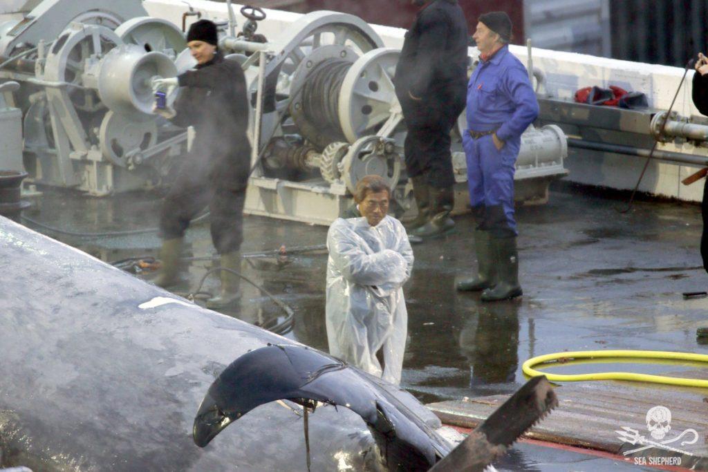 Balenottera azzurra a rischio estinzione uccisa in Islanda