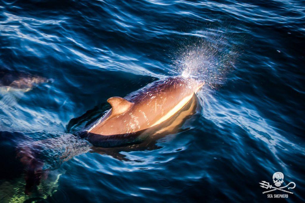 Operazione Dolphin Bycatch