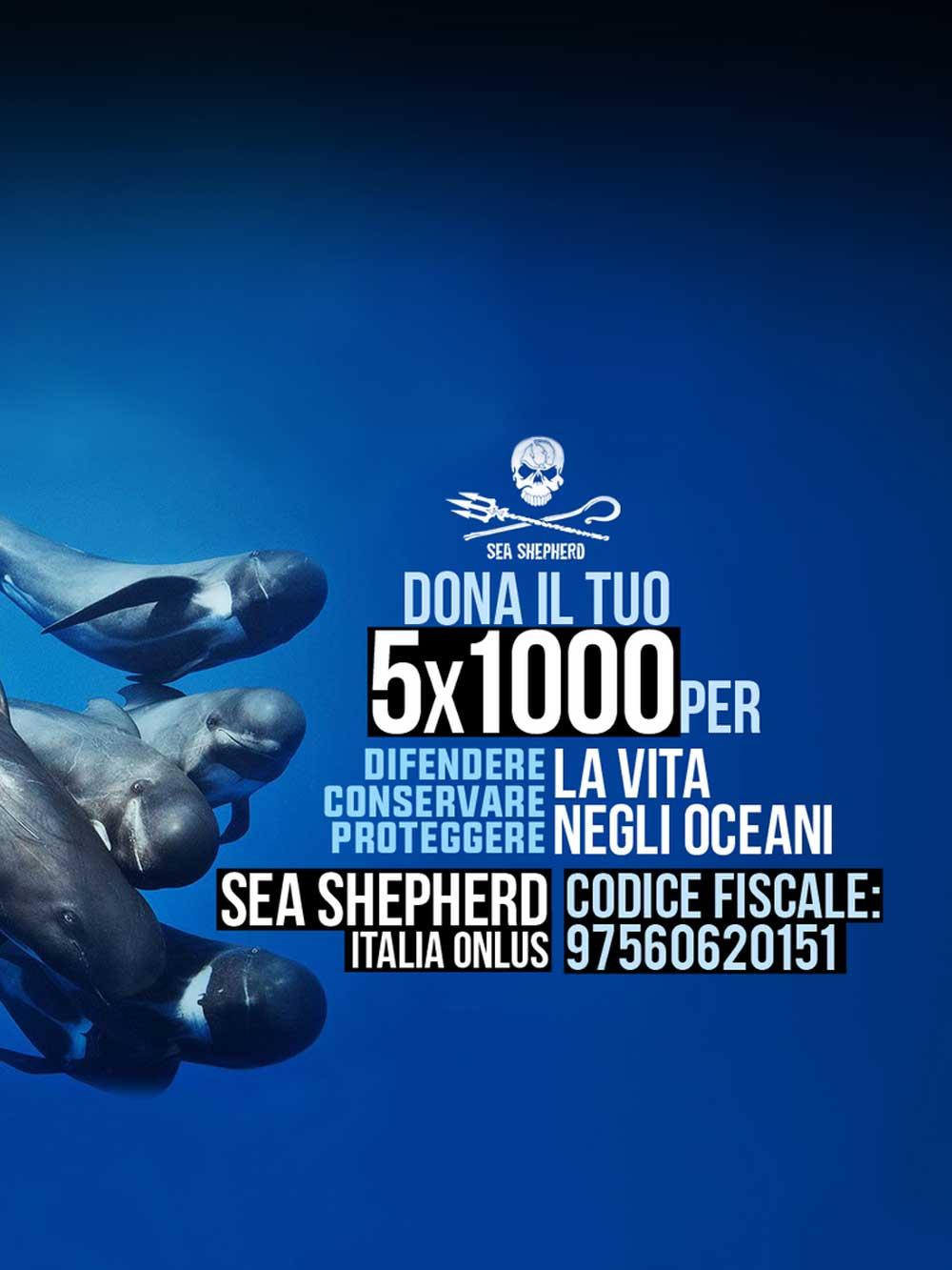 5x1000 donazioni Sea Shepherd per la vita negli oceani